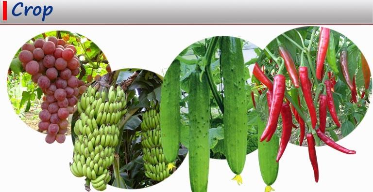 Organic Fulvic Acid Chelated Zinc Fertilzier for Agriculture