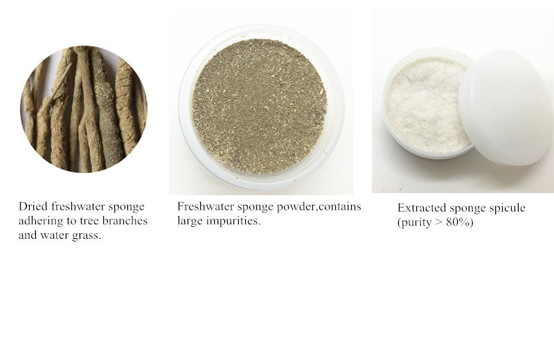 Hydrolyzed Sponge Freshwater Sponge Spicule Material of Cosmetic for Skincare Beauty