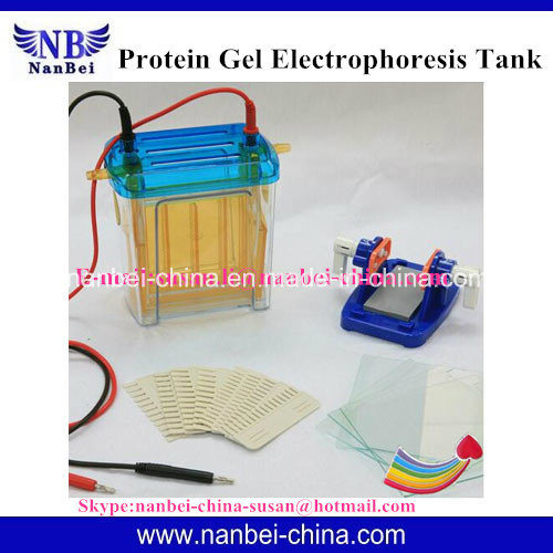 Electrophoresis Cell/Nucleic Acid Sequencing Electrophoresis