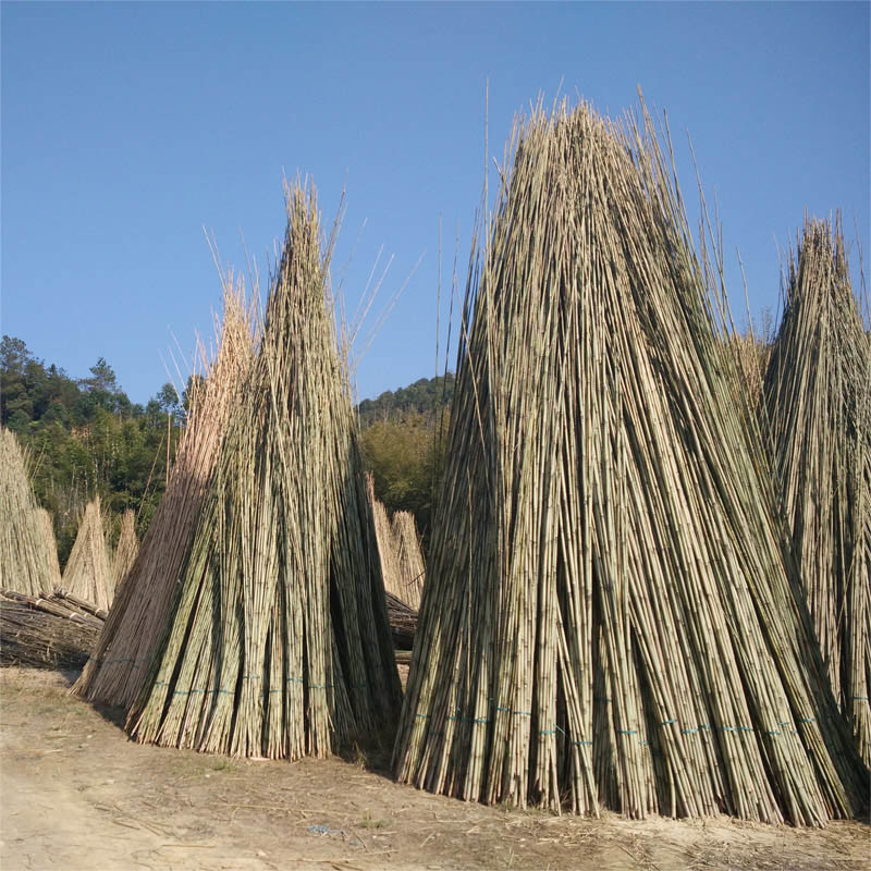 Natural Decorative Bamboo and Color Bamboo