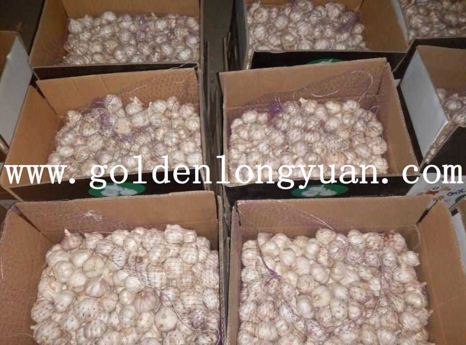 2016 New Season Fresh Red Garlic