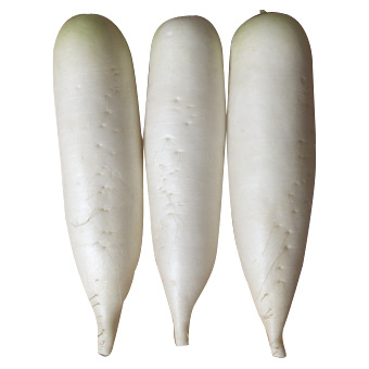 New Crop for Sale Fresh White Radish