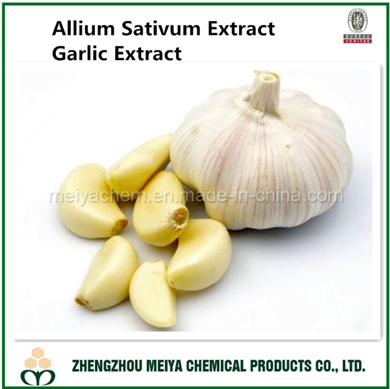 Natural Garlic Extract Allium Sativum Extract with Allicin HPLC