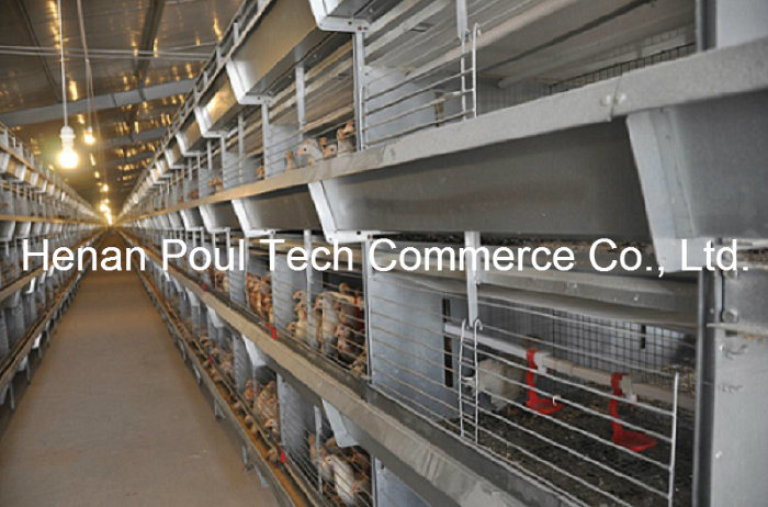 High Quality Automatic Pullet Chicken Cage System (H type)