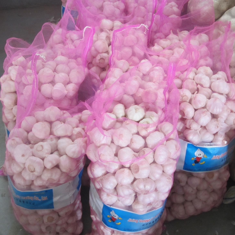 Fresh Garlic Packed with Mesh Bag