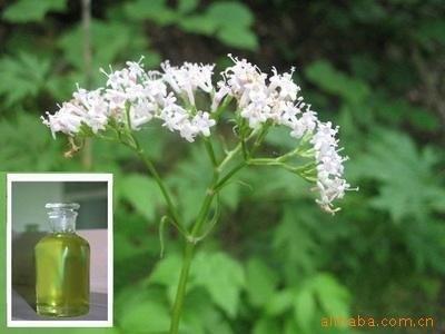 Aromatherapeutic 100% Natural Valerian Root Essential Oil