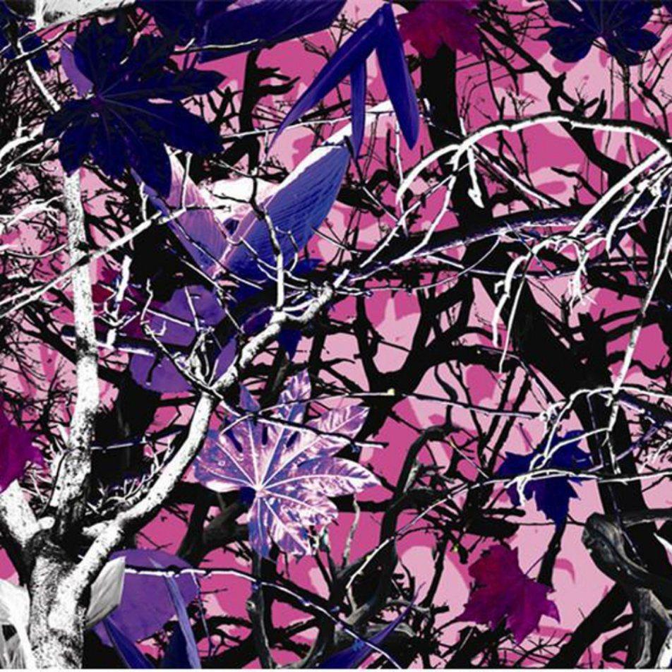 Kingtop 0.5m Width Camouflage Design Hydro Printing Film Water Transfer Film Wdf12526
