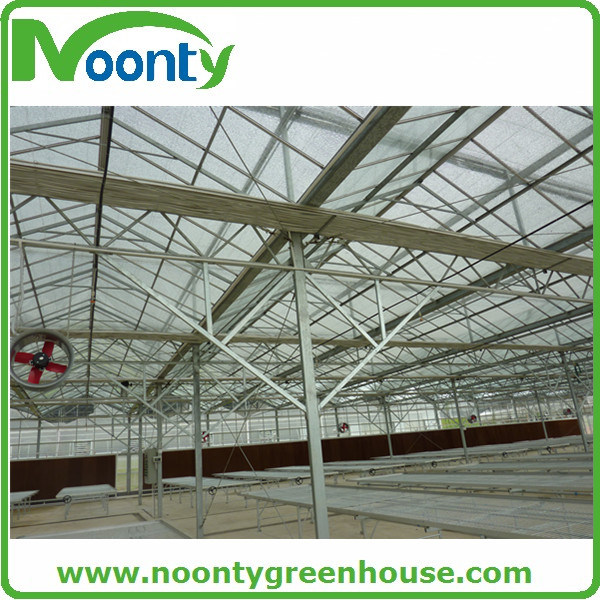 Multi-Span Tempered Glass Greenhouse  for Growing Tomato