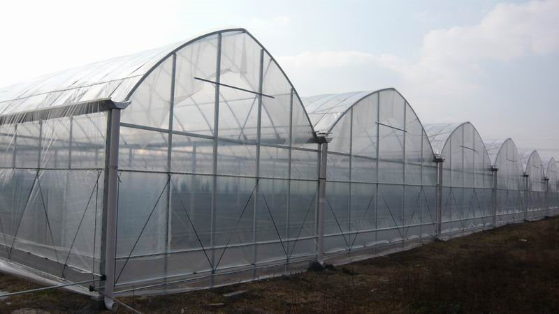 Po and PE Film for Greenhouse