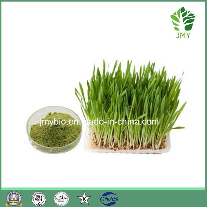 Organic Wheatgrass Extract Powder, 4: 1~10: 1, Rich Vitamin K