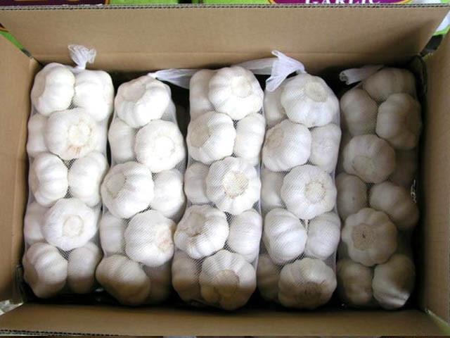 Pure White Garlic in White Mesh Bag