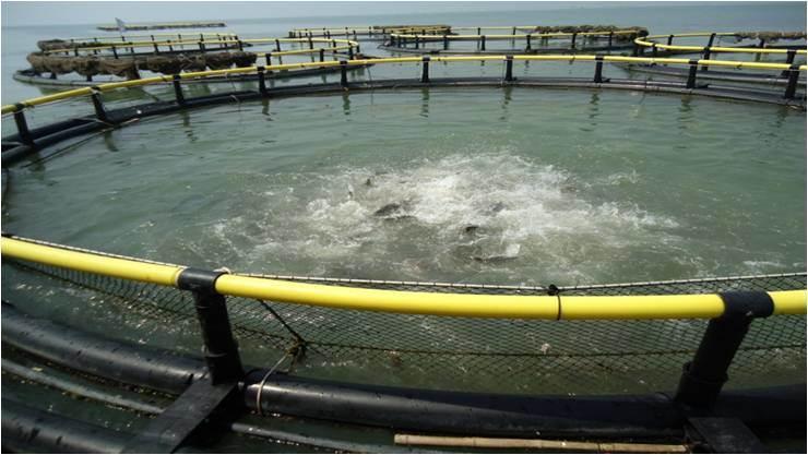 Farming Aquaculture Net Cage
