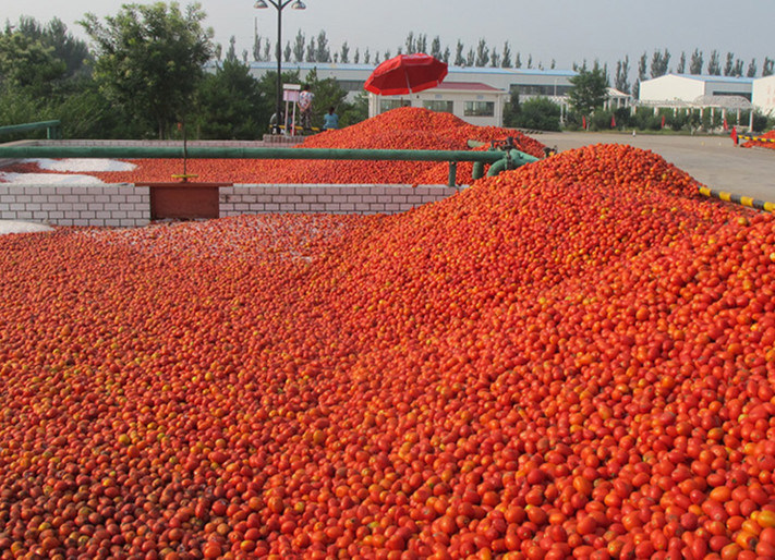(36-38%CB) Tomato Paste in Drum