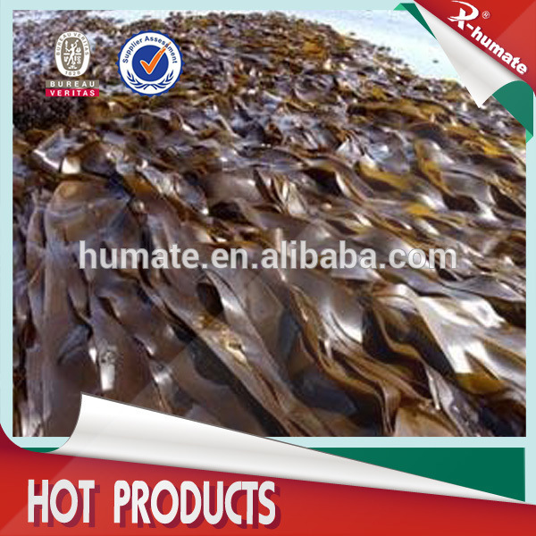 Refined Seaweed Extract Powder/ Flakes Fertilizer
