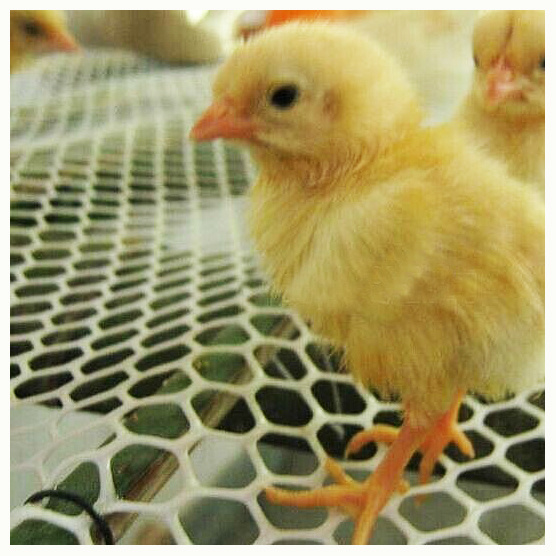 Plastic Chicken Floor Mesh