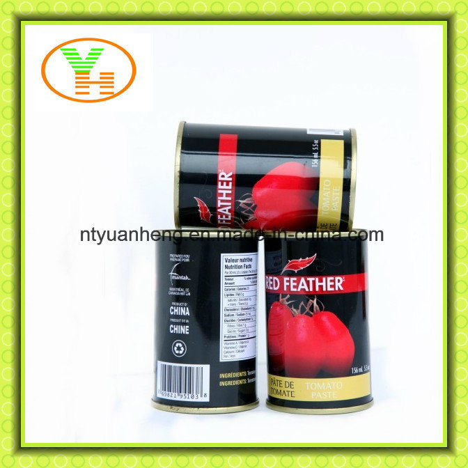 Canned Tomato Paste and Tomato Sauce From China