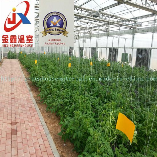 Tomato Planting Polycarbonate Green House