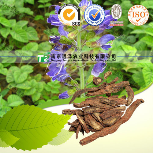Women Health Care Crude Medicine Salvia Miltrorrhiza