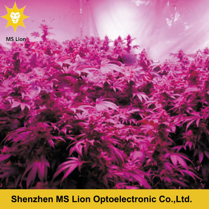 Higher Power 1200W Full Spectrum COB Grow Light with More Cost Efficiency