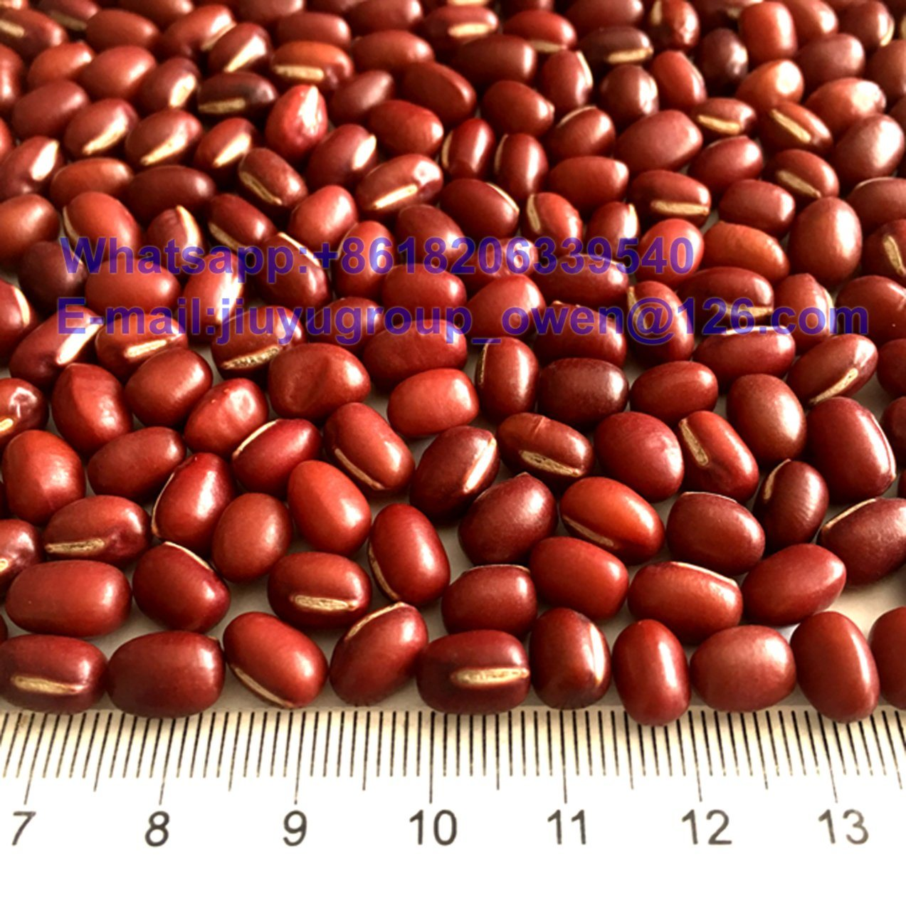 HPS Quality Red Mung Bean New Crop Red Bean PP Bag