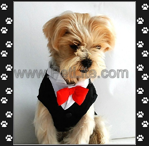 Fashion Pet Clothes CustomMade Dog Wedding Dress S9901