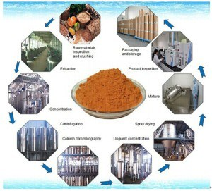 Pueraria Root Extract Kudzu Root Extract