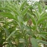 GMP Factory Comestics Raw Material Natural Borneol 464-45-9