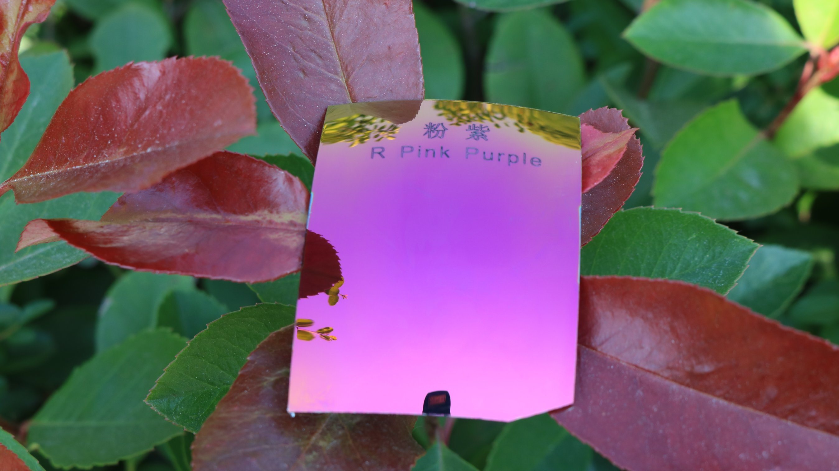 Colorful Eyeglasses Polarized Tac Lens (R Pink Purple)
