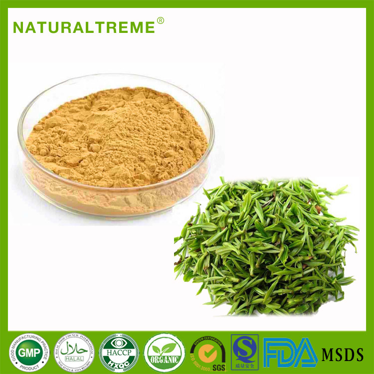 Ratio Plant Extract Matcha Green Tea Extract