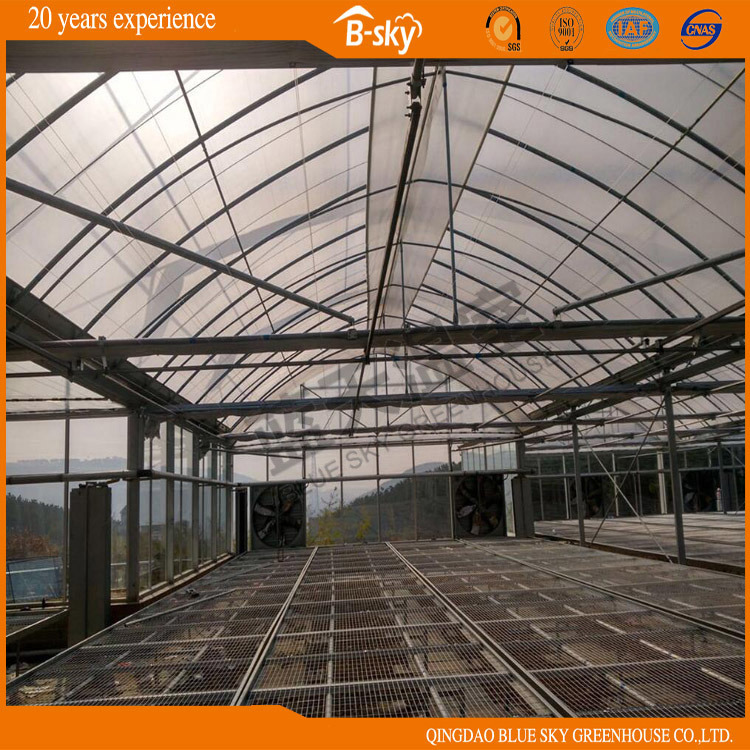 Multi-Span Greenhouse with Plastic Film Covered