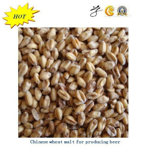 Barley Malt for Producing Beer