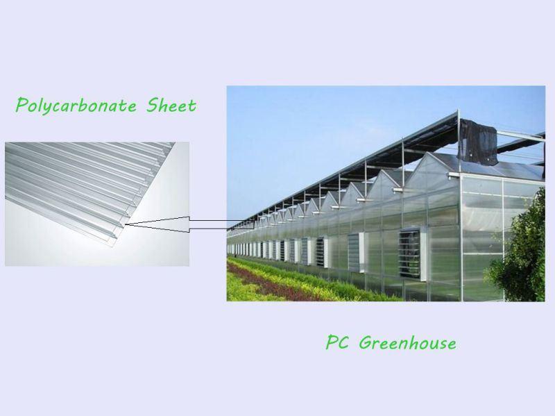 Economical Commercial Polycarbonate Sheet Greenhouse