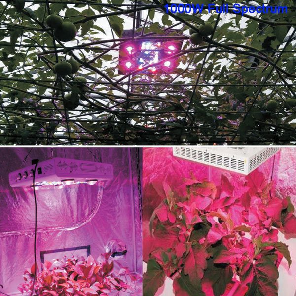 1000W High Power COB LED Grow Light Hydroponics Vegetables Full Spectrum Plant Grow Light