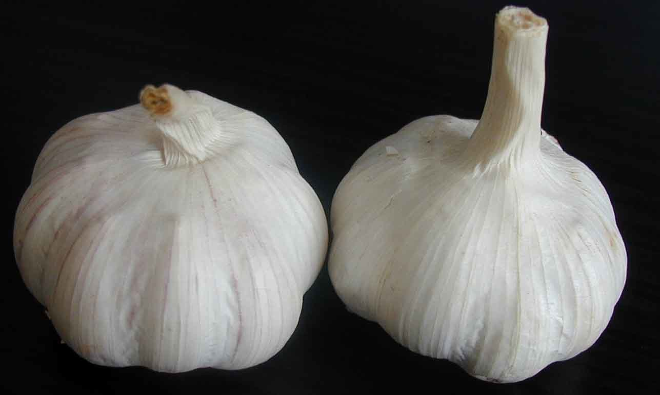 http://image.made-in-china.com/2f0j00ECKaqTmhORzW/Garlic.jpg
