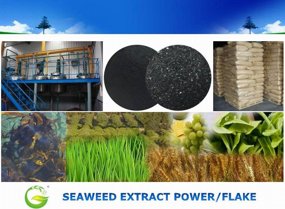 Water Soluble Seaweed Extract Power for Agriculture