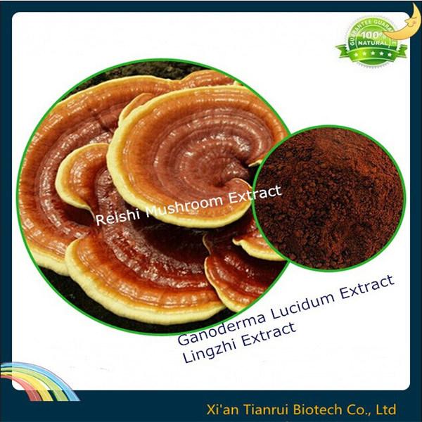 Lingzhi Extract/Ganoderma Lucidum Spore/Reishi Mushroom Extract