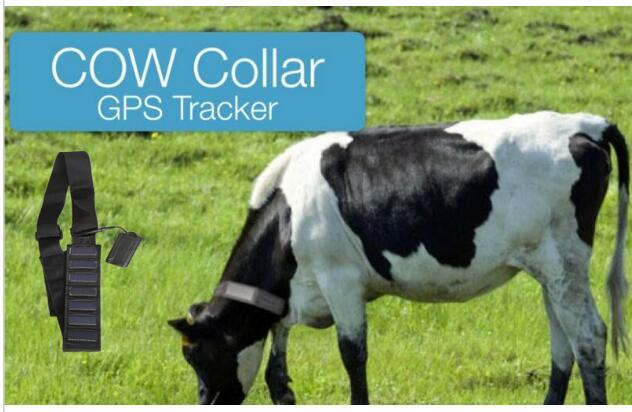 Solar Animal GPS Tracker T500s Collar Waterproof Real Time Locator for Large Size Animals Cow Horse Camel Tracking Geofence