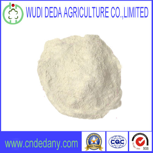 Feed Grade High Quality Wheat Gluten Powder Flour