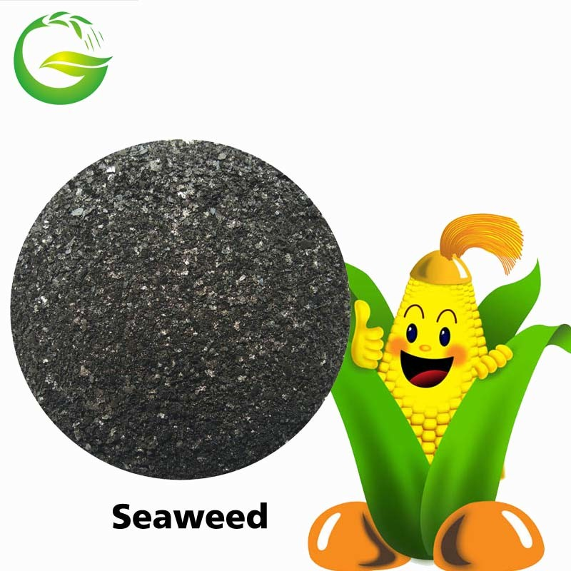 Seaweed Extract Fertilizer Powder or Flake