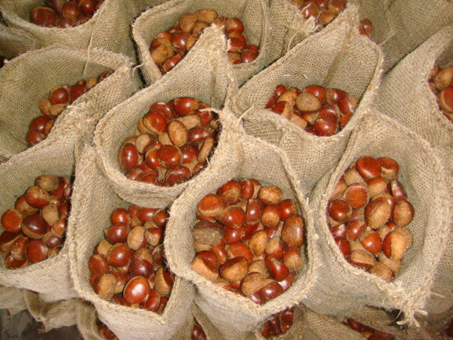 professional New Seasom Export 30-40 Chestnut