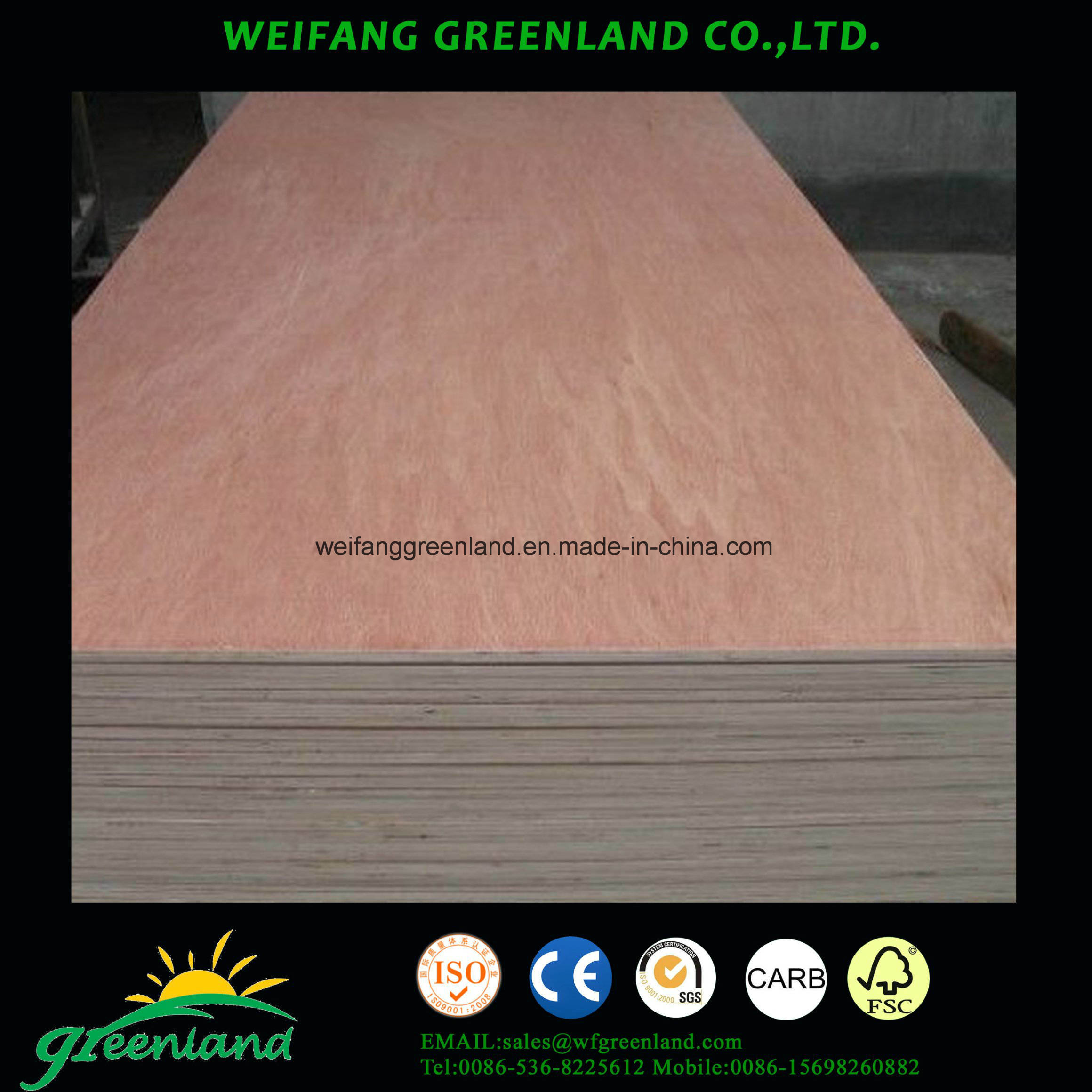 Bintangor Film Plywood with High Quality Poplar Core, Mr Glue