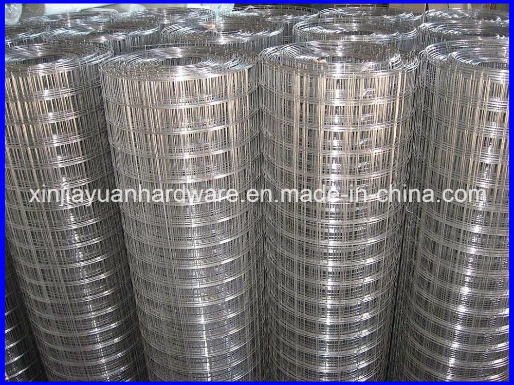 Stainless Steel Galvanized Welded Wire Mesh with Competitive Price