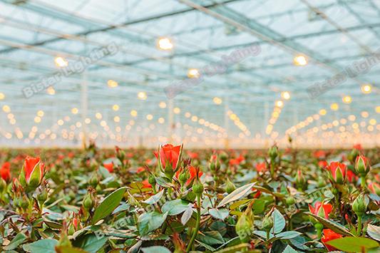 High Power 400W Growlight Hydroponic Lighting for Greenhouse