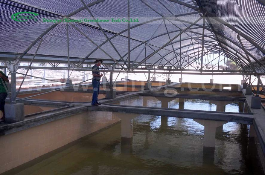 China specially commercial greenhouse fish pond photos for Koi pond greenhouse