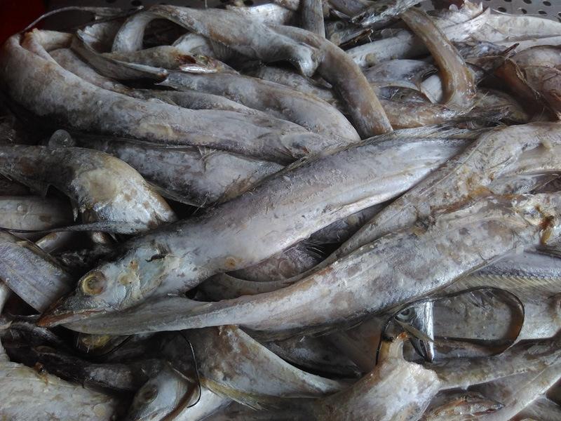 Frozen China Origin Ribbonfish Hairtail Fish