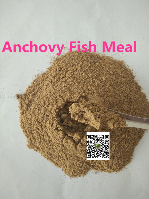 Anchovy Fish Meal (protein 55% 65% 72%) for Tilapia