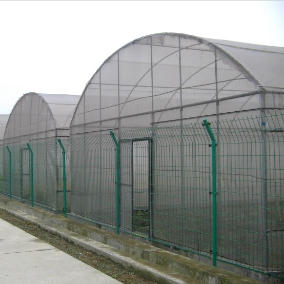 Low Cost Agriculture Single Span Film Greenhouse for Sale From China