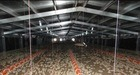 Poultry Shed for Chicken′s House (DG6-001)
