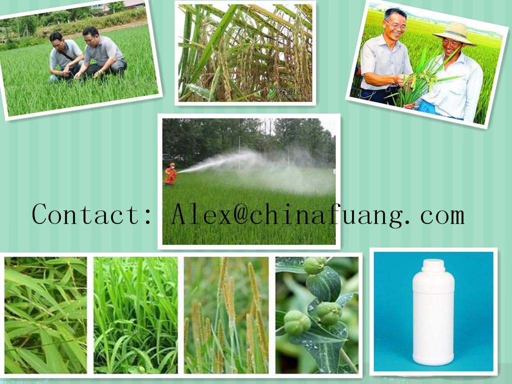 Agrochemicals Factotry Fungicide 85%Tc, 90%Tc, 80% Wp, 50%Wp Mancozeb