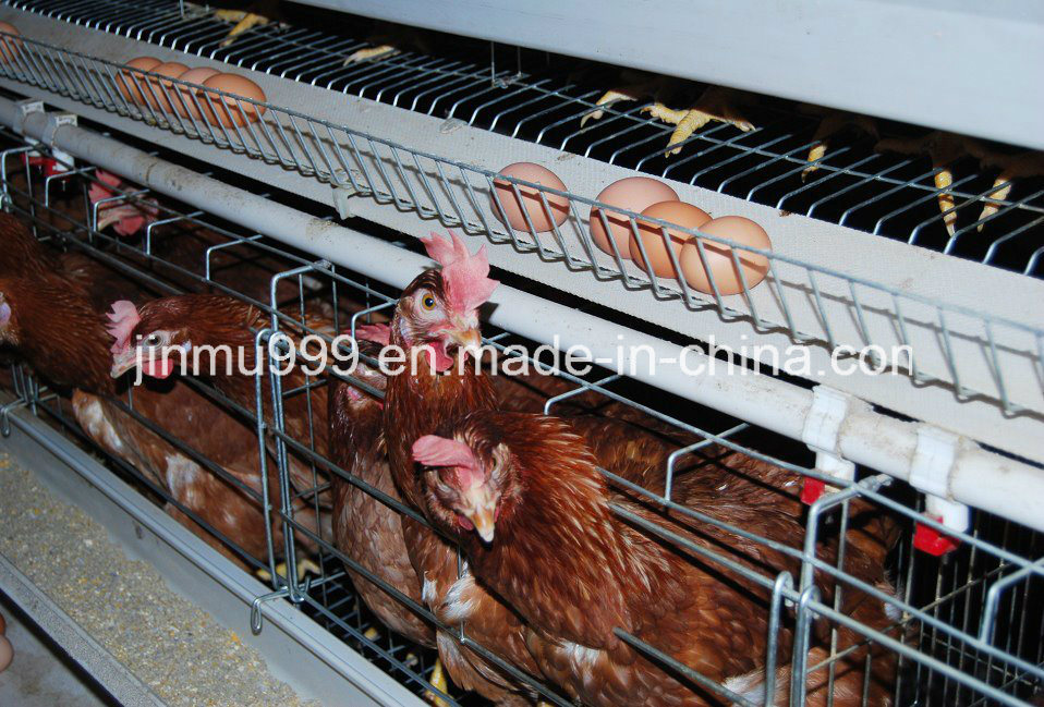 Hot Sale Cages for Layer Battery Chicken